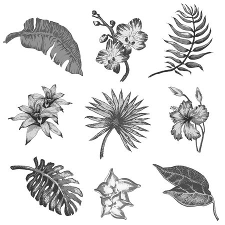 botany: Vector Illustration of tropical Flowers and Palm in Sketch Style for Design, Website, Background, Banner. Doodle Summer Plant Element Template in color. Beach Botany Illustration