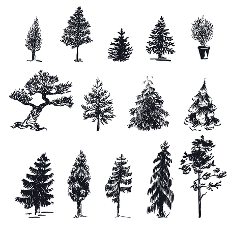 maple tree: Vector Illustration of Scketch Silhouette of Trees for Design, Website, Background, Banner. Forest Hand Drawn Element Template