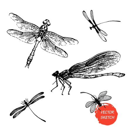 Dragonfly sketch set design