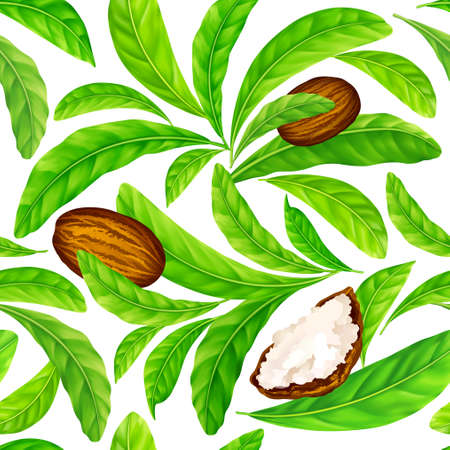 Vector seamless pattern of shea nuts with shea butter and green leaves isolated on a white.