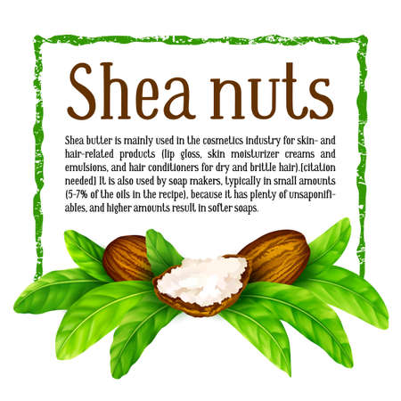 Vector shea nuts with shea butter and green leaves in a square text frame isolated on a white.