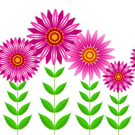 Vector seamless illustration of group of echinacea purpurea blooming flowers with steams and green leaves