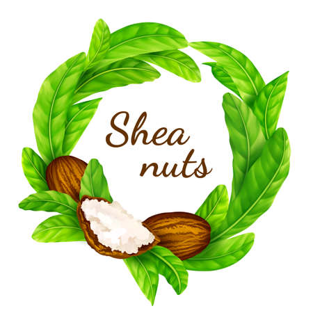 Vector shea nuts with shea butter and green leaves in a round border frame isolated on a white.