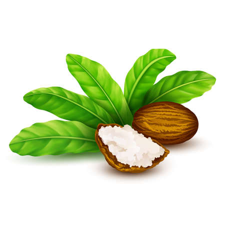 Noix de karité avec des feuilles en vecteur. Noix de karité vectorielles avec du beurre de karité et des feuilles vertes.