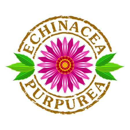 Vector letter stamp with echinacea purpurea flower. Stock Illustratie