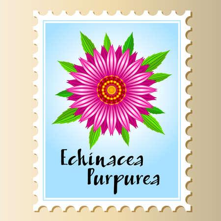 Echinacea purpurea vector flower on a postage stamp.