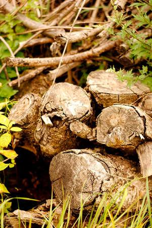 forgotten: forgotten firewood