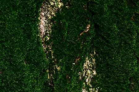 Old tree bark powdery lush green moss