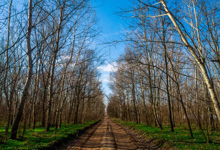 Rural road in the forest photo
