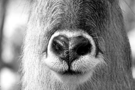 animal nose: Animal nose close up photo Stock Photo