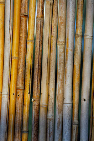 Abstract reed texture closeup photo photo