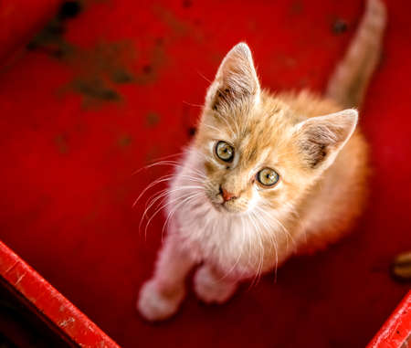 banter: Young cat in box Stock Photo