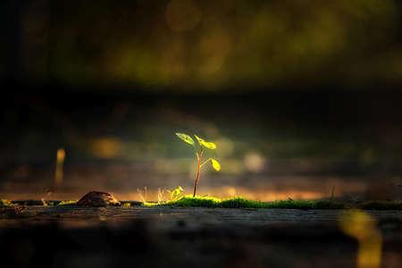 日光の自然の背景の小さな植物