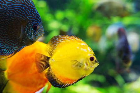 pescado de mar de colores en el primer del acuario