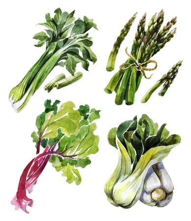 Watercolor vegetable set, organic ingredients. Celery, rhubarb, Bok Choy and Asparagus. Hand draw raw food illustration on white background. Can be used for labels, menus, dishes and for packing seeds Zdjęcie Seryjne