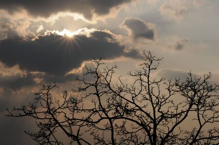 Radiant sun, heavy clouds, tree silhouette Stock Photo - 5742274