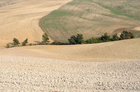 undulating: Undulating fields in Tuscany