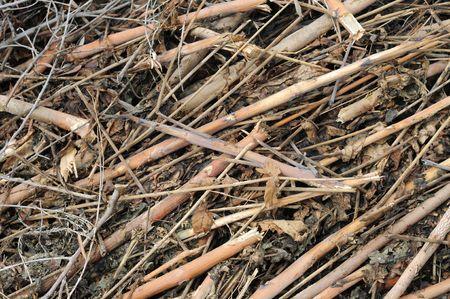 wood stick: Sticks and stones