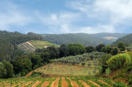Vineyards and olive fields in Chianti, Tuscany photo