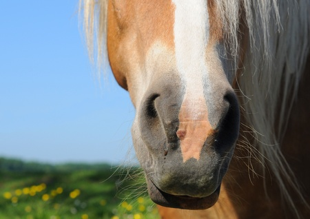 Macro of horses snout, shallow depth of field