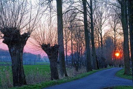 polder: Pollard willows in polder landscape at sunset Stock Photo