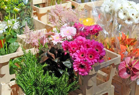 Pink gerbera and other flowers on the market, shallow depth of field Stock Photo - 12963653