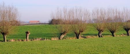 polder: polder landscape with pollard willows, flanders, europe, selective focus