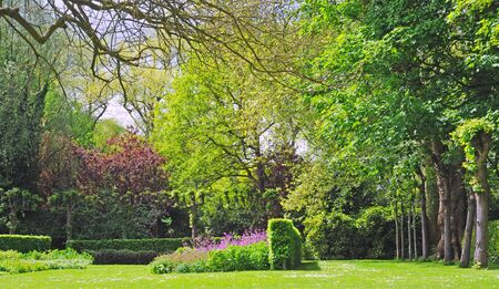 Park with trees, bushes and purple flowers in spring time Stock Photo - 14120406