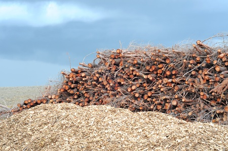 cypress logs with wood pulp and cloudy sky, nature background, shallow depth of field Stock Photo