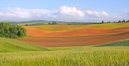 spring fields in the crete senesi, tuscany, italy photo