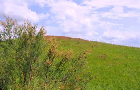 spring grasses and flowers, blue sky an white clouds in the crete senesi, tuscany, italy