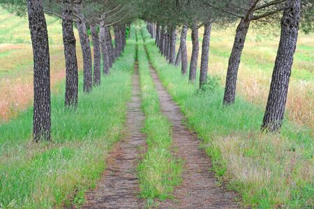 symmetric country road with vanishing point flanked with overgrown trees, selective focus