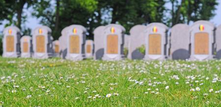world war 1: graves of belgian soldiers fallen in world war 1 in oeren, flanders, belgium, intentional blur, selective focus on flowers in foreground