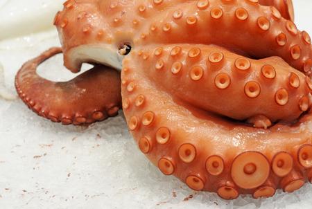 pulpo (octopus vulgaris) on ice, selective focus