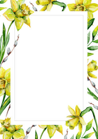 Daffodils and green grass and pussy-willow on white flower background. Floral greeting card. Watercolor invitation card template. May be used for wedding, Holyday or birthday greeting card.