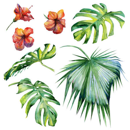 jungle plants: Watercolor illustration set of tropical leaves, dense jungle. Hand painted. Banner with tropic summertime motif may be used as background texture, wrapping paper, textile or wallpaper design Stock Photo