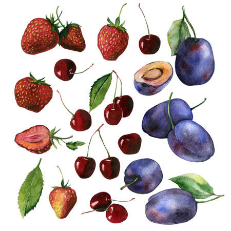 greengrocery: Watercolor set of fruits including plums, strawberries and cherries may be used for food packaging or textile or kitchen design print
