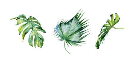 dense: Watercolor illustration of tropical leaves, dense jungle. Hand painted. Banner with tropic summertime motif may be used as background texture, wrapping paper, textile or wallpaper interior design