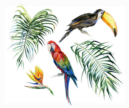 Watercolor illustration of tropical leaves, dense jungle. Toucan bird and scarlet macaw parrot.Strelitzia reginae flower. Hand painted. Banner with tropic summertime motif. Coconut palm leaves. Stock Photo