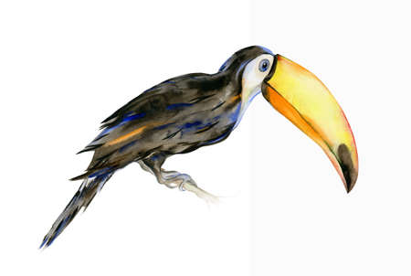 Watercolor illustration of tropical toucan bird. Ramphastos. Trendy artwork with tropic summertime motif. Exotic Hawaii art. Design for fabric and decor.