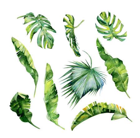 열 대 잎, 빽빽한 정글의 수채화 그림. 손으로 그린. 트로픽 여름 모티브와 배너 배경 질감, 포장지, 섬유 또는 벽지 인테리어 디자인으로 사용할