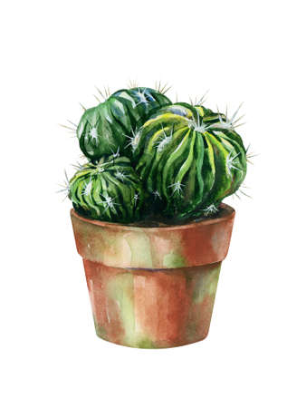 Cacti watercolor isolated on white. Cactus illustration can be used as print, home or garden decoration. Stock Photo