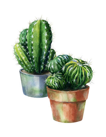 Cacti watercolor isolated on white. Cactus illustration can be used as print, home or garden decoration