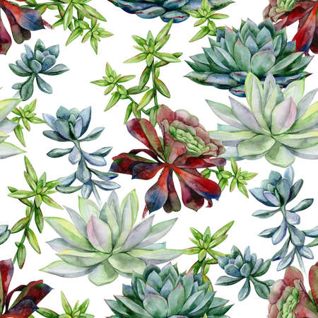 Watercolor succulents seamless pattern, echeveria illustration, botanical painting of dudleya and zwartkop. Stone rose. Sempervivum art. Elements for design of invitations, movie posters, fabrics.