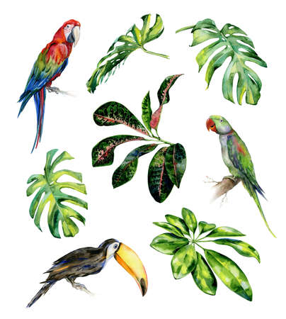 Watercolor illustration of tropical leaves and birds. Toucan, scarlet macaw parrot and green Alexandrine parrot. Monstera leaves, schefflera or dwarf umbrella tree, croton plant painting.
