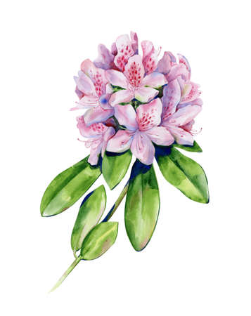 Tropical rhododendron flower watercolor isolated on white. Interior artwork with single pink azalea flower. Exotic plants illustration.