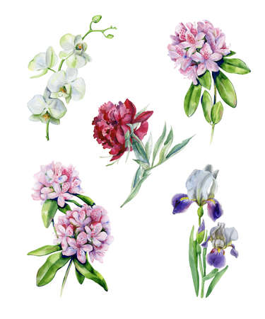 Tropical rhododendron flowers and iris flower. Interior watercolor set with azalea and white orchids. Exotic plants print. Pink peony watercolor illustration isolated on white background.