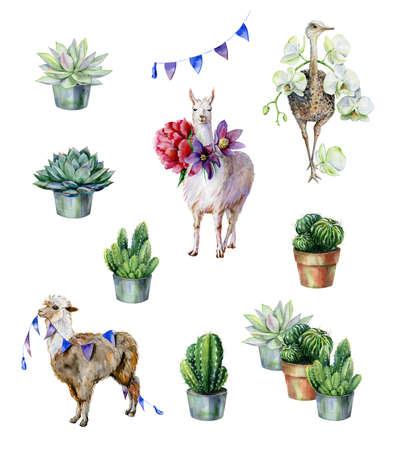 Watercolor set with alpaca, llama, ostrich and cactus and succulents. Use as interior print or textile design. Nursery room decor or childrens clothing illustration. Garden doctor elements. 스톡 콘텐츠