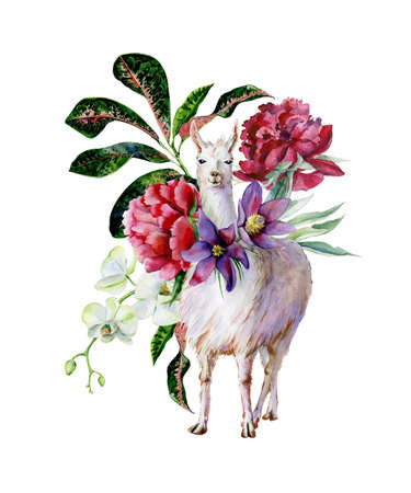 Watercolor cartoon illustration of cute alpaca with peonies and white orchids, croton leaves. Interior artwork and nursery room decoration. Fantasy animal llama print.
