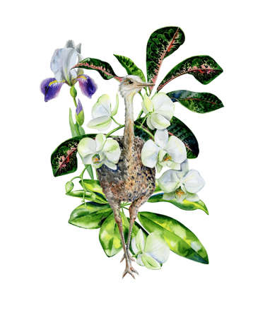 Watercolor cartoon illustration with white orchids, iris flowers, schefflera and croton leaves. Interior artwork and nursery room decoration. Fantasy animal bird print. 스톡 콘텐츠